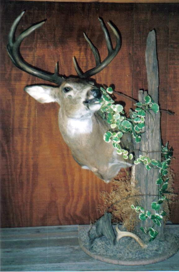 Whitetail Deer Pedestal Mount Ideas Car Interior Design